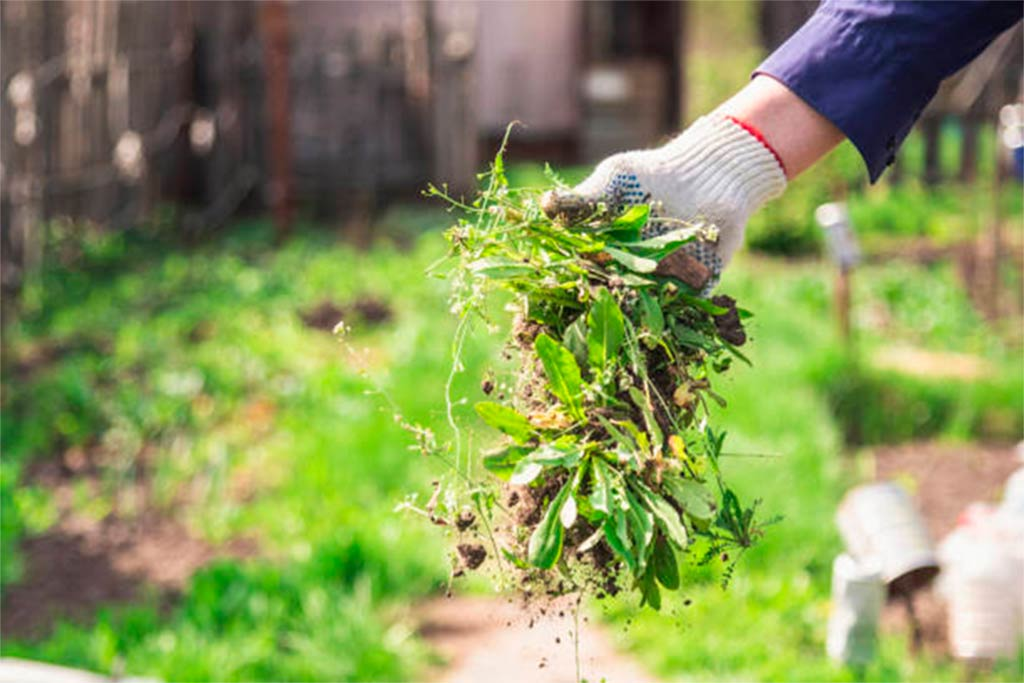 mantenimiento y mejora del jardin